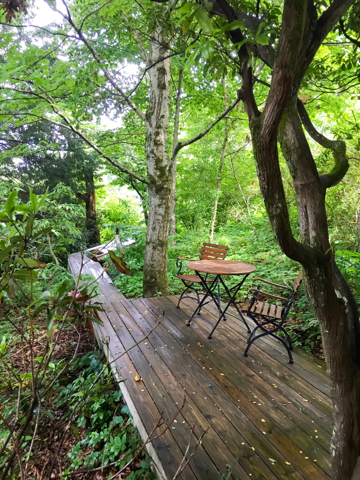 Walkway to Laurel Treehouse at Fire Mountain - Highlands, North Carolina